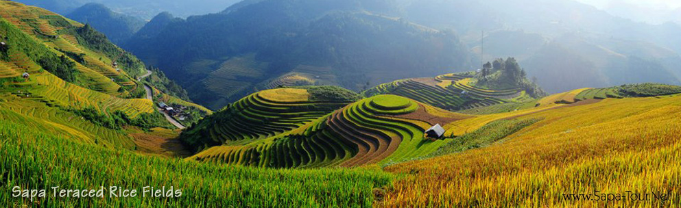 Sapa Teraced Rice Fields