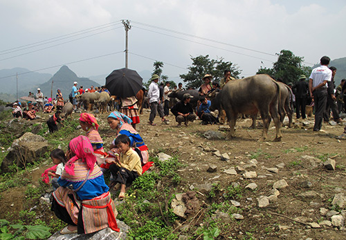 Buffalo at Bac Ha Market