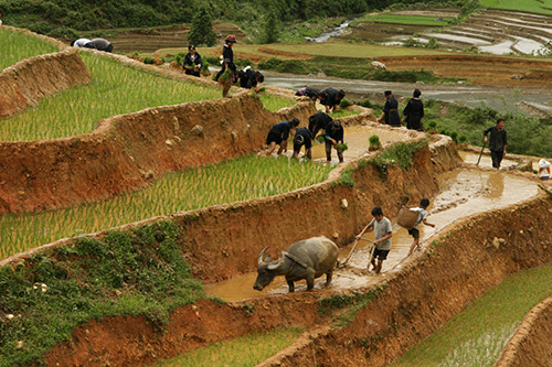 Working field in Lao Chai