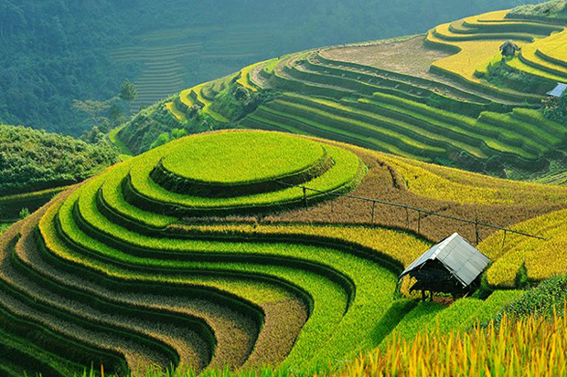 Terraced rice fields in sapa vietnam for Terrace images