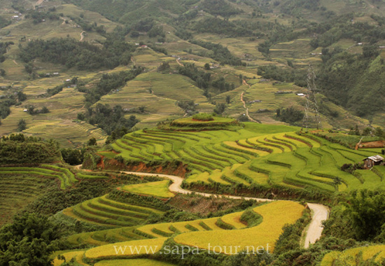 Terraced rice fields Sapa